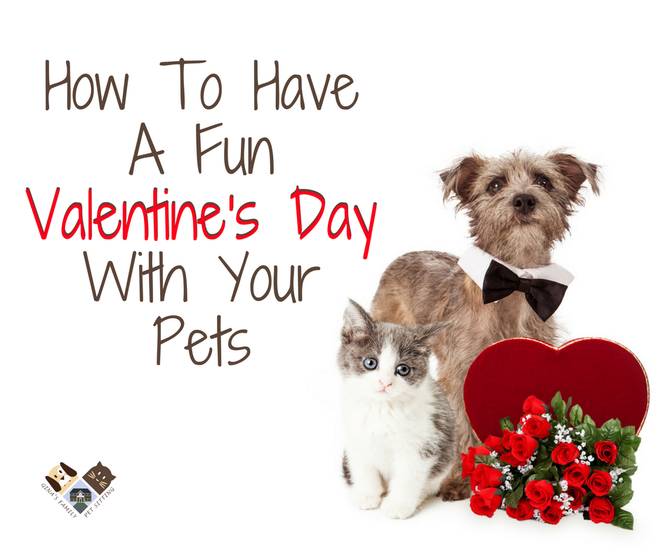 valentine s day with your dog and cat do s and don ts