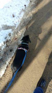 Gina and Rocko Dog Walking