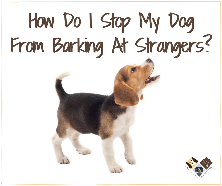 how to teach my dog to stop barking at strangers